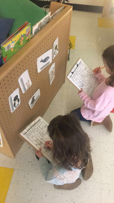 Our Polar Animals theme is in full swing in Pre-K! These girls were measuring and recording the height of different animals!